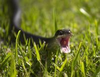 Chagrijnige slang