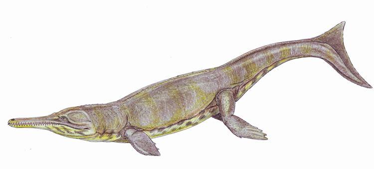 Neptunidraco Ammonicitus