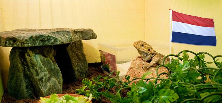 Bevrijdingsdag bij Exotus Serpenti!