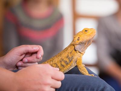 Reptielen presentatie op school