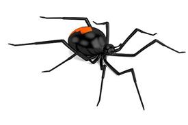 Dier Module 2: Vogelspinnen